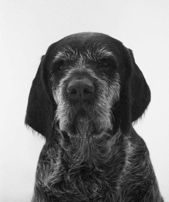 portrait database - dog - Canis lupus familiaris - Michal Kozák